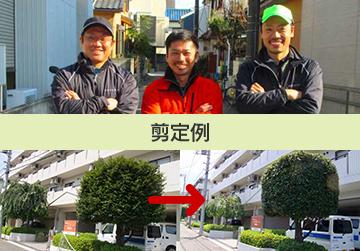 横浜の造園  庭木の剪定・伐採